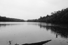Light Rain over Mongaup Pond (Zach K) Tags: rain mist drizzle drops pond mongaup mongauppond campsite camping nature natural lake body water catskills region new york newyork nys dec state park campground black white bw blackwhite watersports fujifilm fuji xt2 23mm xf23mm xf23mm2 xf23mmf2 23mmf2 stormy weather drenched walk hike grey dark day