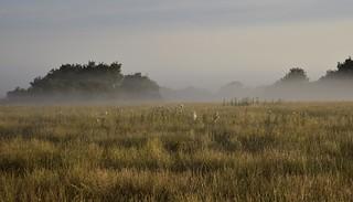 Rinder zählen im Frühnebel - es ist wieder einmal kein Tier zu sehen; Bergenhusen, Stapelholm (12)