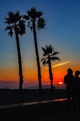 46 (morgan@morgangenser.com) Tags: sunset red orangeyellow blue pretty cloud silhouette sun evening dusk palmtrees bikepath sand beach santamonica pacificpalisades beautiful black dark cement amazing gorgeous inawe ca photobymorgangenser