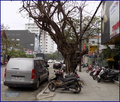 Vietnam, Hue Sidewalk Tree 20180213_135916 DSCN3228 (CanadaGood) Tags: asia asean seasia vietnam vietnamese hue building tree parking motorcycle canadagood 2018 thisdecade color colour