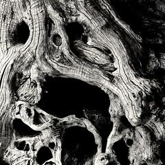 Gnarled (phileveratt) Tags: blackwhite monochrome canon eos77d efs18135 tree stump gnarled texture
