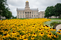 Iowa City Flowers (Phil Roeder) Tags: iowacity iowa universityofiowa oldcapitol flowers blackandgold blackeyedsusans leicax2 leica pentacrest