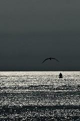 Freedom........ (rienschrier) Tags: vlissingen zeeland zee strand vogel zwartwit blackandwhite sunset birds water