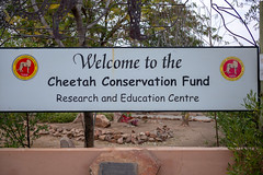 L1009205 (Ivan Lau) Tags: namibia cheetahconservationfund