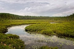 Algonquin Spruce Bog (otterman51) Tags: algonquin canada cedars ontario ortbaldauf tree aged bog colours nature ortbaldaufcom outdoors photography pines stream summer swamp spruce