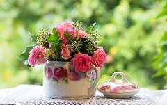 Still life (G_E_R_D) Tags: stillleben stilllife naturemorte stilleven bodegón rose efeu ivy hedera helix blume flower zuckerdose sugarbowl