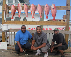 IMG_2923 (FWC Research) Tags: atlanticredsnapper redsnapper fisheriesdependentmonitoring snappersamplling