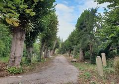 Haunted ! (standhisround) Tags: isleworth brentford westlondon london england uk graveyard outdoors trees path graves sky allsaints church