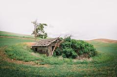 Where Have All The Hobbits Gone? (Pedalhead'71) Tags: abandoned easternwashington homestead palouse rural washington whitmancounty