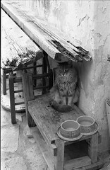 A cat without a hat... (Nikos.K.) Tags: athens greece 2018 anafiotika plaka cat pet animal film blackandwhite ilford fp4 fp4125 expiredfilm homebrewdeveloper d76 olympusom2n zuiko 50mm18