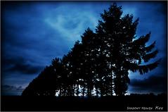 藍...I (SHADOWY HEAVEN Aya) Tags: 09081870a0010 blue trees tree dusk sunset sky clouds cloud paysage landscape outdoor 雲 空 picsjp phosjapan igersjp igers tokyocameraclub hokkaido japan coregraphy 写真の奏でる私の世界 写真撮ってる人と繋がりたい 写真好きな人と繋がりたい ファインダー越しの私の世界 日本 北海道 風景写真