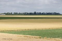 Flevoland-Netherlands (Dries van Assen) Tags: flevoland nederland kleuren vlak
