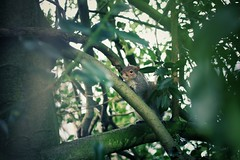 Londres (Mrs_Hannah) Tags: londres london ardilla squirrel