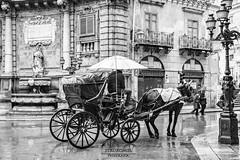 La Carrozza (Stauromel) Tags: palermo siclia italia bn blancoynegro blackwhite carrozza calesa cochedecaballos cuatrocanti stauromel street alquimiadigital lluvia fuji fujixt2