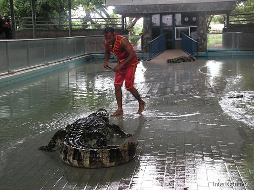 В пащу крокодилу Паттайя Таїланд Thailand InterNetri 14