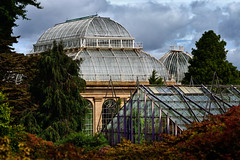 Royal Botanic Garden of Edinburgh. (O.Blaise) Tags: royalbotanicgardenedinburgh scotland edinburgh ukscotland serre tropicale