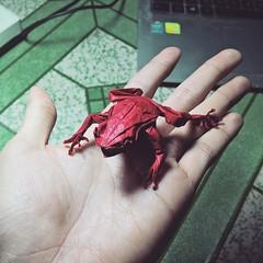 Tree frog - designed by Satoshi Kamiya (Nguyễn Tuấn Tài) Tags: