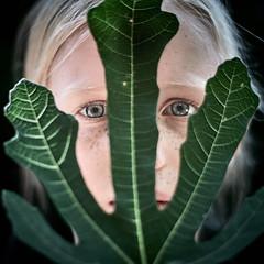 Leaf portrait (PascallacsaP) Tags: leaf fig figleaf portrait staring classicchrome monochrome portraiture