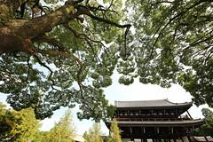Tofukuji temple (Teruhide Tomori) Tags: 東福寺 京都 日本 禅寺 木造建築 寺院 tofukuji temple kyoto japan japon architecture building construction wooden zentemple