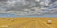 Landschaft mit Strohballen (garzer06) Tags: wolken deutschland strohballen stroh landschaftsbild mecklenburgvorpommern gustow landschaftsfoto landscapephotography wolkenhimmel inselrügen naturphotography insel naturfotografie rügen landschaftsfotografie