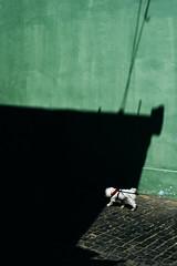 #38 (Dorel Gnatiuc) Tags: dog shadow street streetphotography sunset fuji fujixt2 xt2 fujifilm