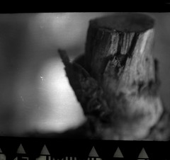 Full Open 1:3.5 Tessar Rolleiflex Automat k4b (Listenwave Photography) Tags: filmphotography bokeh agfa rolleiflexautomatk4b listenwave