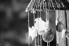 sea shell chime (DeanaClarkson...JMC) Tags: seashell sea shell windchime wind chime black white precious breakable wood