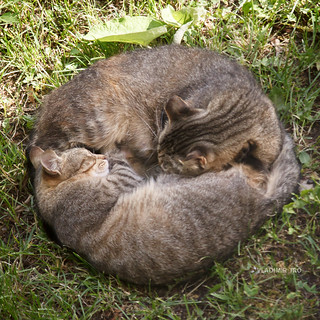 Cats (Zen)