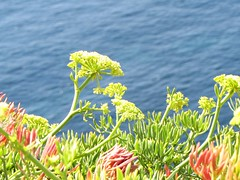 Formentera (arxabin) Tags: formentera coast sea costa mar azul verde nature
