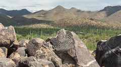 Hohokam Petroglyphs at Signal Hill in Saguaro National Park (QuietRain31) Tags: az arizona cacti cactus delbac desert saguaro saguaronationalpark sanxavier sanxaviermission southwest tucson visittucson hohokam petroglyphs 450ad native americans ngc natgeo