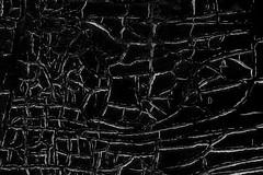 Cracked Paint (gripspix (OFF)) Tags: 20180802 wood holz decay vergammelt paint farbe peelingpaint abblätterndefarbe rissig cracked bw texture textur