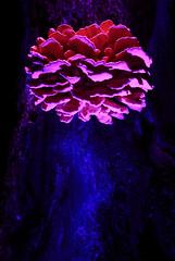 Summer Freak II  #lightpainting #longexposure #lightart #lightpaintingblog #lpwalliance #lightjunkies #fungus #mushrooms (Hugo Baptista) Tags: mushrooms fungus longexposure lightjunkies lightpaintingblog lpwalliance lightpainting lightart
