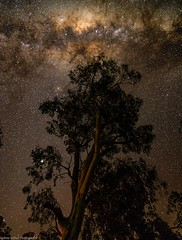 night in the woods (andrew.walker28) Tags: milky way galactic centre core center stars long exposure tree wood
