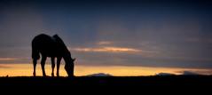 Na hora gris (Eduardo Amorim) Tags: cavalos caballos horses chevaux cavalli pferde caballo horse cheval cavallo pferd tropilhas tropilla tropillas crioulo criollo crioulos criollos cavalocrioulo cavaloscrioulos caballocriollo caballoscriollos campo field champ auffangen pampa campanha pelotas costadoce riograndedosul brésil pôrdosol poente entardecer poniente atardecer sunset tramonto sonnenuntergang coucherdesoleil crepúsculo anoitecer mindigtopponalwaysontop brasil sudamérica südamerika suramérica américadosul southamerica amériquedusud americameridionale américadelsur americadelsud cavalo 馬 حصان 马 лошадь ঘোড়া 말 סוס ม้า häst hest hevonen brazil eduardoamorim