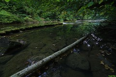 nassi sur le Lison - Nans Sous Sainte Anne (francky25) Tags: nassi sur le lison nans sous sainte anne rivière sauvage étiage franchecomté doubs été niveau