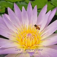 Zen (tomquah) Tags: sleepinglily flowers flowermacro bee flowerscloseup huaweisg huaweimate9 tomquah nparks