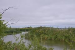 Green Lagoon II (Bad Alley (Cat)) Tags: hillsidebeach manitoba marsh swamp lagoon lake water shore wetland rushes green lakewinnipeg