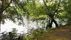 At the Balžis Lake 23 (rimasjank) Tags: lake foliage nature summer reed water