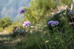 Le sentier — Fontan, Alpes-Maritimes, juillet 2018 (Stéphane Bily) Tags: stéphanebily fontan saorge alpesmaritimes valléedelaroya montagne mountain