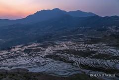 Yuanyang Rice Terraces (Rolandito.) Tags: china chine yunnan yuanyang rice terrace terraces reisterrassen asia sunrise dawn reflection