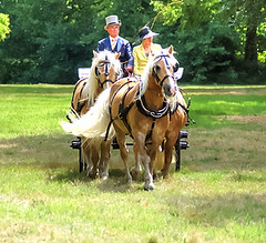 Horses Are Like Chocolates You Can't Just Have One (genevieve van doren) Tags: horses chevaux carriage carosse 3 castle chateau oostkamp competition