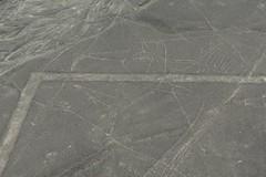 whale lineas de Nazca lines Peru (roli_b) Tags: whale wal ballena lineas de nazca nasca lines peru aerial view sobrevuelo 2018 window seat travel viajar tourism