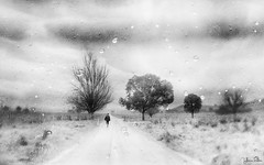 journey through life . . . (YvonneRaulston) Tags: blackandwhite bw black white blackwhite road lane path country trees person man figure bokeh atmospheric art australia corryong vic victoria artistry creativeartphotography calm creative clouds cold day digitalart digital emotive emotion farm impact sky moody moments mysterious monochrome mono sony soft photoshopartistry peaceful rain raindrops surreal shower yvonneraulston