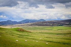 Escape to the country anyone? (Shutterbytes by Michele Hamilton) Tags: june2018 scotland clouds countryside hills sheep sky unitedkingdom gb green landscape rural agri agriculture kirknewton west lothian