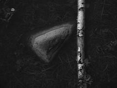 kiel2018P8151303 (2) (ghoermann) Tags: deu düsternbrook germany kiel schleswigholstein balticsea