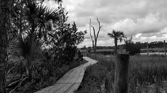 Palmetto Islands County Park (sherry kuhlkin) Tags: palmetto island palm tree country park county boardwalk marsh mount pleasant sc south carolina nature tropical sherry kuhlkin observation tower creek tidal trails saltwater charleston