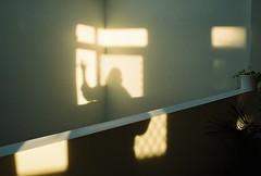 (nikki.lake) Tags: self melbourne filmisnotdead reflection shadow analogue kodakportra400 kodakportra portra400 portra canonae1 analog film 35mm