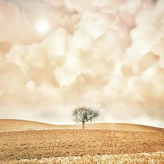 ~ solo ~  Skåne Sweden April (Tankartartid) Tags: mjukafärger softtones moody redigerad edited picsart sol sun åkrar fields clouds moln ensamt solo tree träd pålandet landskap landsbygd landscape natur nature norden nordic skåne europe sverige sweden