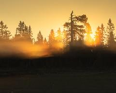 Koppången III (Gustaf_E) Tags: dalarna dimma dis forest koppã¥ngen landscape landskap mist morgon naturreservat orsafinnmark pine pines skog sommar sverige sweden tall woods