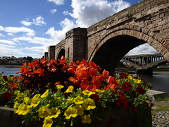 Berwick Bridge (cycle.nut66) Tags: old bridge berwick upn tweed stone arches flowers quayside red blue yellow sky water olympus epl1 evolt four thirds zuiko